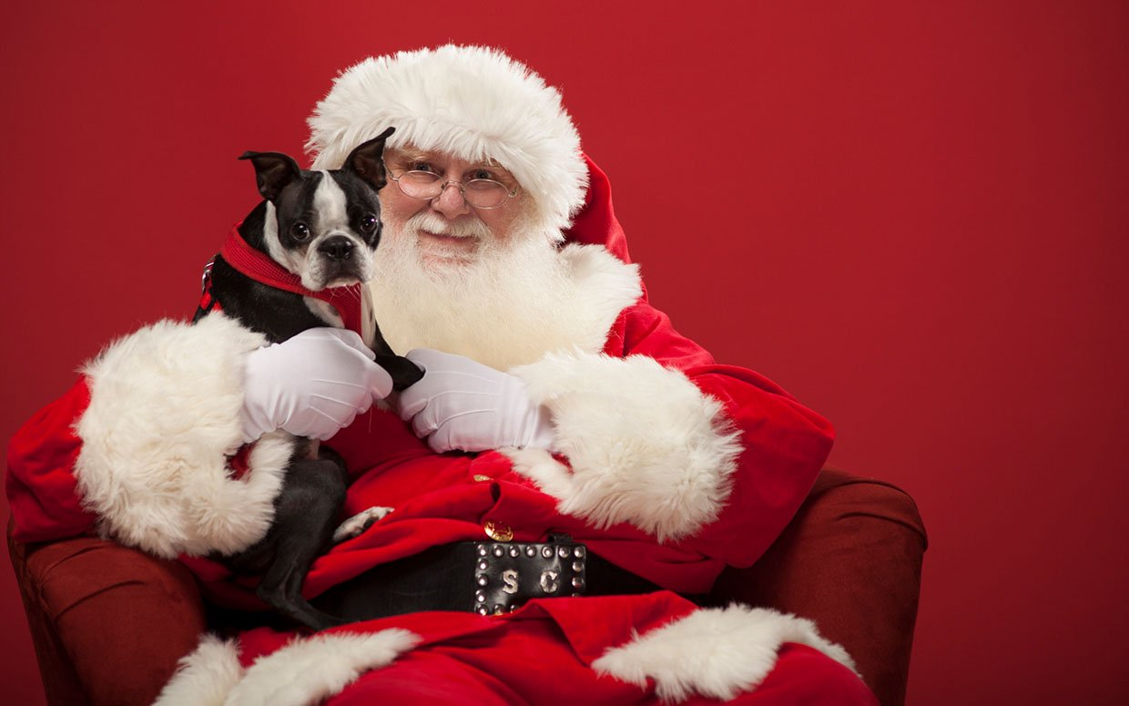 Paws & Claws Holiday Pictures
